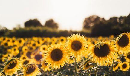5 fröhliche Sommerwäsche
